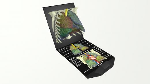Holographic anatomy book created as teaching aid for medical